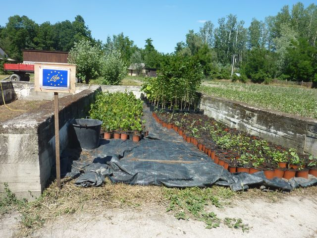 sadenice pre projekt