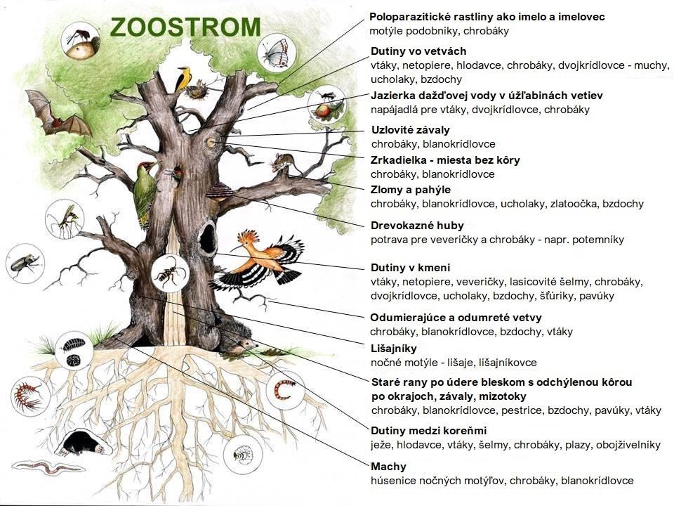 hlavová vŕba ako biotop pre rôzne živočíchy